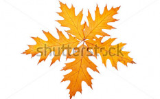 Stock-photo-five-autumn-leaves-isolated-on-white-background-40808860