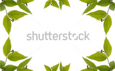 Stock-photo-foliage-frame-with-green-leaves-copy-space-for-your-text-99660968