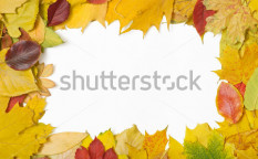 Stock-photo-frame-made-of-mixed-autumn-leaves-6465736