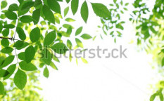 Stock-photo-fresh-leaves-on-white-background-53713189
