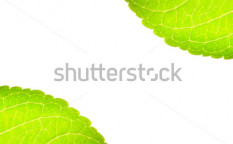 Stock-photo-green-leaf-at-corner-with-space-for-text-isolated-on-white-background-65309026