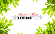 Stock-photo-green-leave-on-white-background-64724860