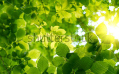 Stock-photo-green-leaves-43167931