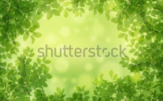 Stock-photo-green-leaves-99341876