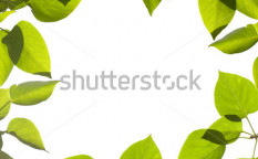 Stock-photo-green-leaves-border-frame-isolated-on-white-61957453