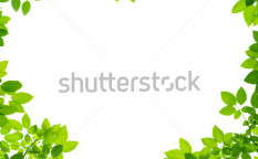 Stock-photo-green-leaves-in-heart-shape-on-white-background-92470609