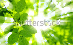 Stock-photo-green-leaves-over-abstract-background-51151318