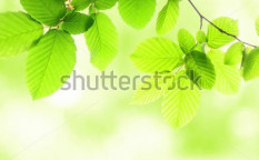 Stock-photo-green-summer-leaves-with-copyspace-showing-nature-concept-62217010