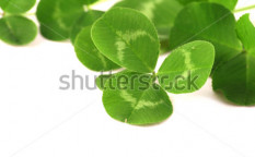 Stock-photo-leaf-52530166