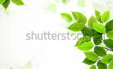 Stock-vector-branch-with-fresh-green-leaves-92835784