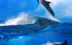 Stock-photo-a-flock-of-playful-dolphins-swimming-underwater-and-one-leaping-out-from-big-sea-surfing-wave-89870611