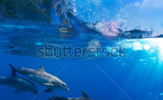 Stock-photo-a-small-flock-of-dolphins-playing-in-sunrays-underwater-underneath-of-breaking-wave-100130225