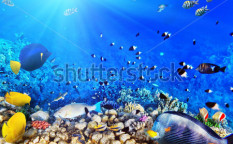 Stock-photo-coral-and-fish-in-the-red-sea-egypt-118746253