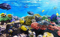 Stock-photo-coral-and-fish-in-the-red-sea-egypt-118935850