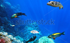 Stock-photo-coral-and-fish-in-the-red-sea-egypt-africa-125243729