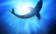 Stock-photo-deep-under-the-ocean-looking-up-towards-a-shark-83814235