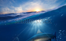 Stock-photo-design-template-with-underwater-part-and-sunset-skylight-splitted-by-waterline-and-angry-hungry-112035833