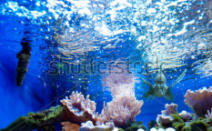 Stock-photo-fish-in-the-aquarium-125208323