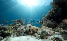 Stock-photo-ocean-coral-and-fish-42923335