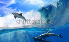 Stock-photo-oceanview-with-sunlight-a-flock-of-playful-dolphins-swimming-underwater-and-one-of-them-leaping-71335912