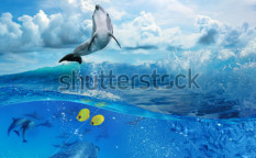 Stock-photo-oceanview-with-sunlight-a-flock-of-playful-dolphins-swimming-underwater-and-one-of-them-leaping-71517415