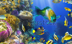 Stock-photo-photo-of-a-tropical-fish-on-a-coral-reef-81562777