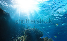 Stock-photo-red-sea-underwater-coral-reef-with-fishes-and-sunrays-at-the-surface-120624256