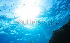 Stock-photo-red-sea-underwater-coral-reef-with-fishes-and-sunrays-at-the-surface-123649999
