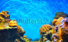 Stock-photo-shallow-underwater-without-fishes-88311370