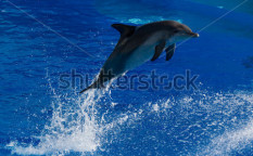 Stock-photo-the-dolphins-performance-snapped-in-ocean-park-hong-kong-45645253