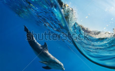 Stock-photo-tropical-seascape-with-water-waved-surface-and-dolphin-swimming-underwater-89989561