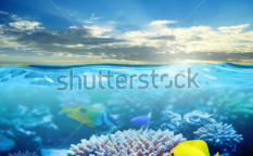 Stock-photo-under-water-tropical-sea-life-in-sunset-light-119626315