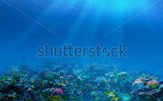 Stock-photo-underwater-coral-reef-background-117851221