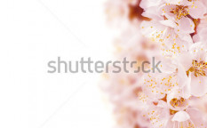 Stock-photo-beautiful-blossoms-border-28726348