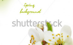 Stock-photo-cherry-blossom-border-29383114