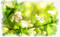 Stock-photo-spring-flowers-124529926
