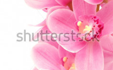 Stock-photo--flower-orchid-99354560