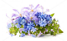 Stock-photo-beautiful-bouquet-of-spring-flowers-on-a-white-background-100542283