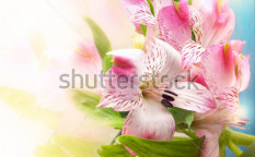 Stock-photo-beautiful-flowers-background-123675946