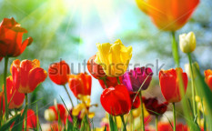 Stock-photo-beautiful-spring-flowers-24206422