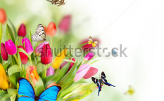 Stock-photo-beautiful-spring-flowers-with-butterflies-97893452