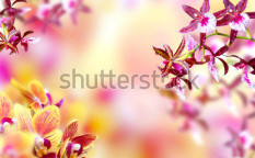 Stock-photo-blooming-pink-and-yellow-orchid-background-103866035