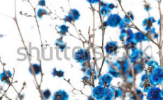 Stock-photo-blue-flowers-73256362
