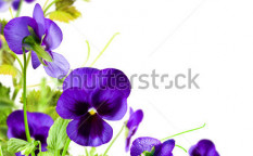 Stock-photo-blue-flowers-violet-with-green-leafs-on-white-background-93622801
