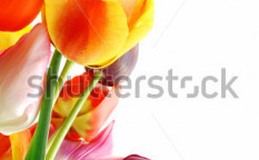 Stock-photo-bunch-of-beautiful-spring-flowers-colorful-tulips-against-white-background-28026148