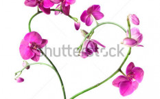 Stock-photo-heart-from-pink-orchids-isolated-on-white-35876440