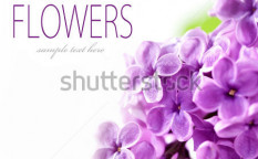 Stock-photo-lilac-branch-on-a-white-background-with-sample-text-76071595