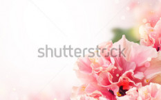 Stock-photo-nice-background-with-hibiscus-flowers-101575228