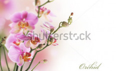 Stock-photo-orchid-border-45724513