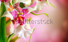 Stock-photo-orchid-flowers-design-104202911